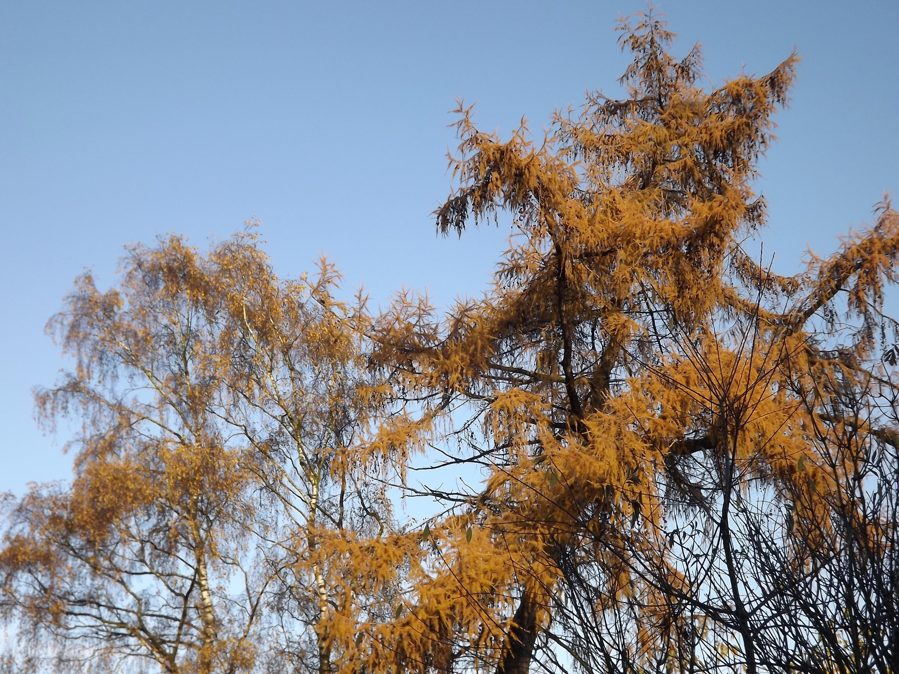 5632-goldener-herbst