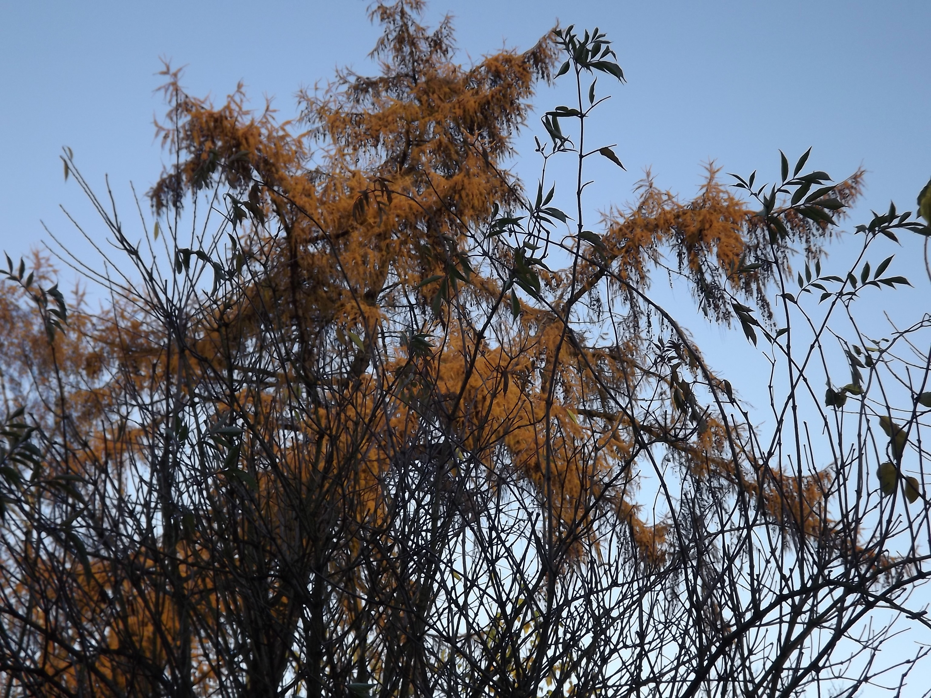 5633-goldener-herbst