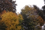 5538-herbst-wald