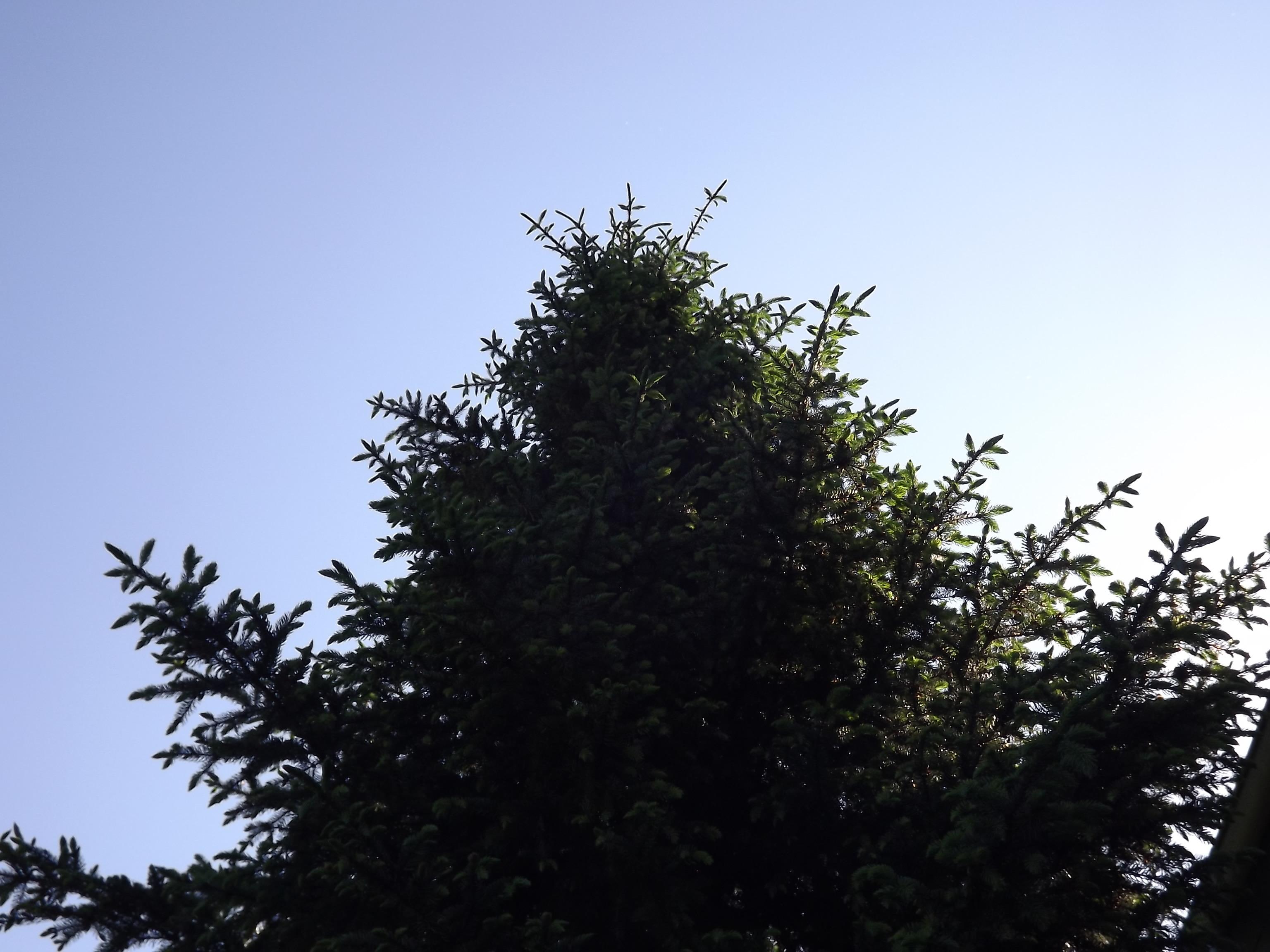 6125-tanne-himmel-blau