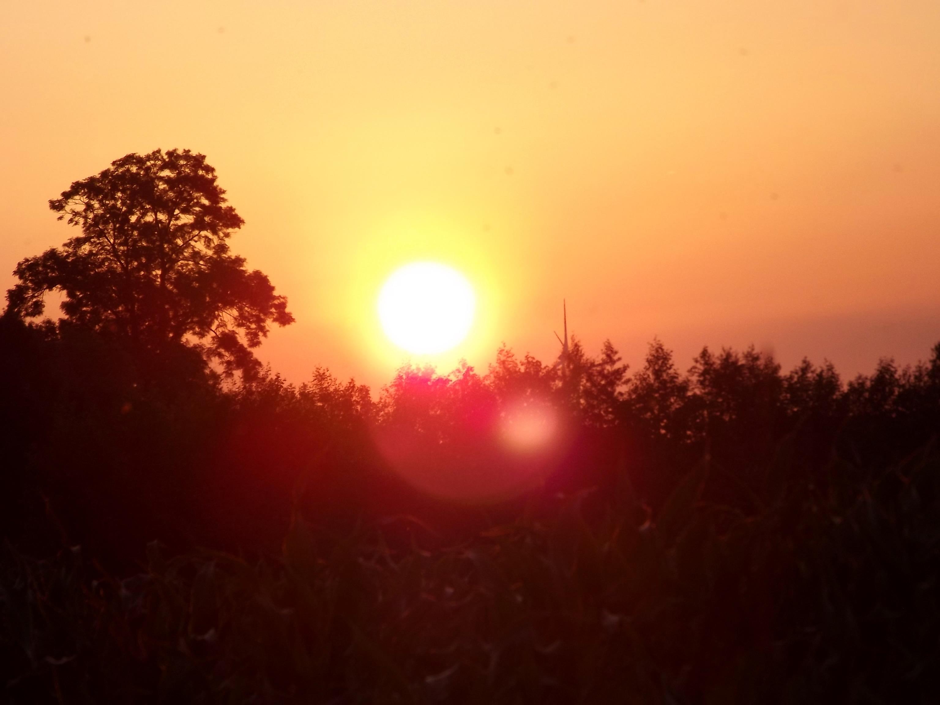 6241-sonnenaufgang-sonnenuntergang-wald-himmel