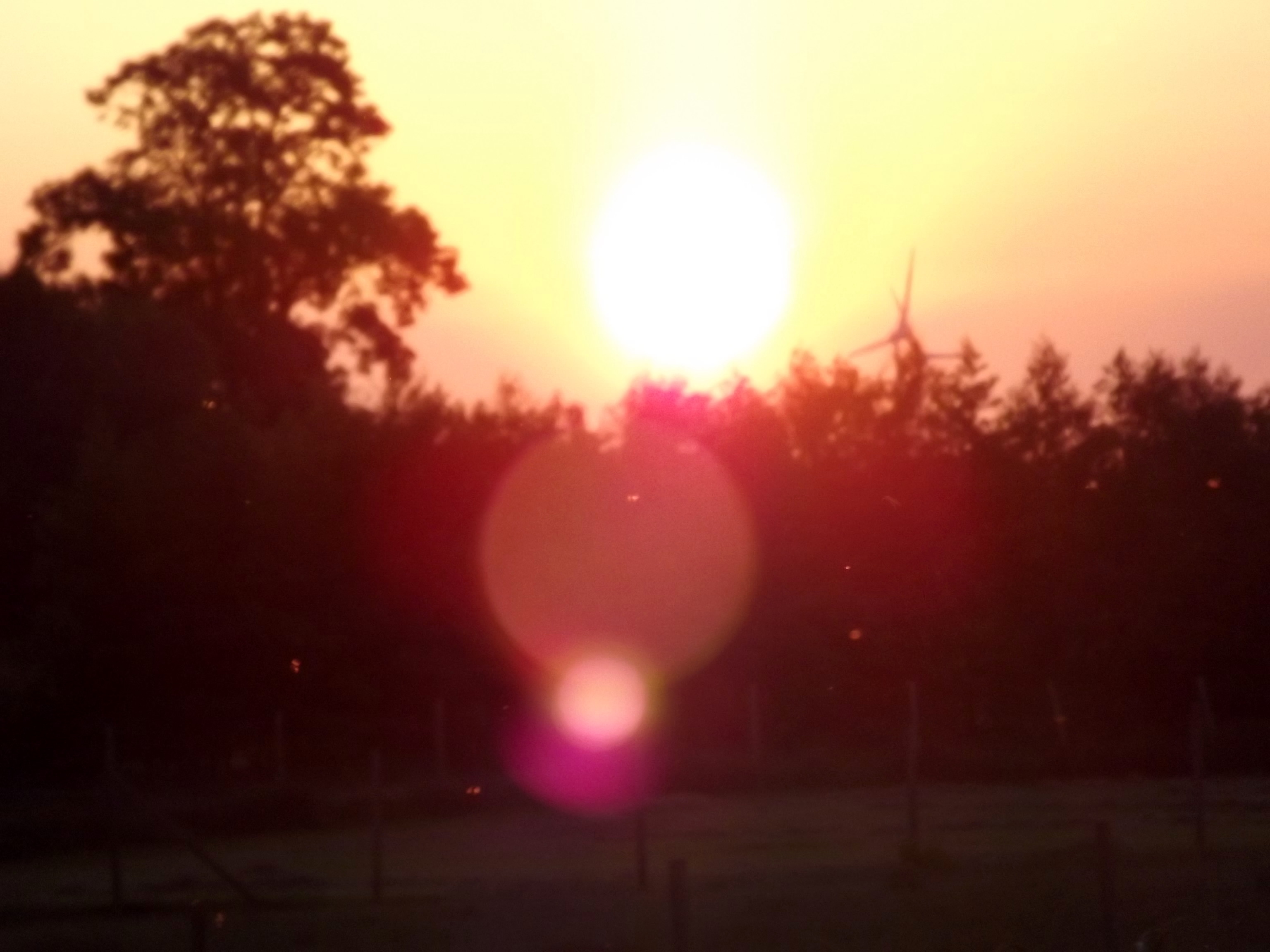 6242-sonnenaufgang-sonnenuntergang-wald-himmel-lensflare