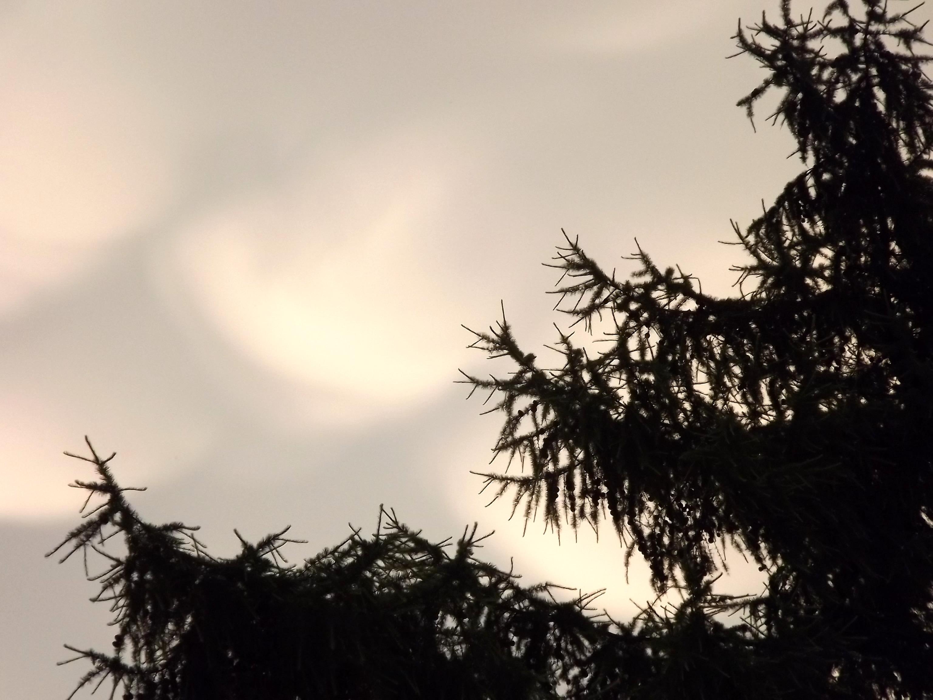 6252-himmel-wolken-zuckerwatte-tanne