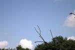 6203-baeume-wolken-himmel