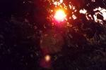 6240-sonnenaufgang-sonnenuntergang-aeste