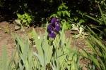 6022-iris-sonnenlicht