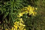 6041-gelber-bodendecker