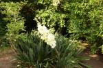 6291-palmlilie