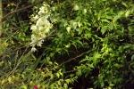 6310-palmlilie
