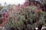 meditarane-pflanzen