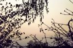4984-zweige-braun-beige-himmel