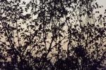 4985-zweige-braun-beige-himmel