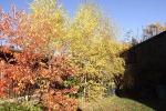 8138-blaetter-rot-gelb-gruen-blauer-himmel