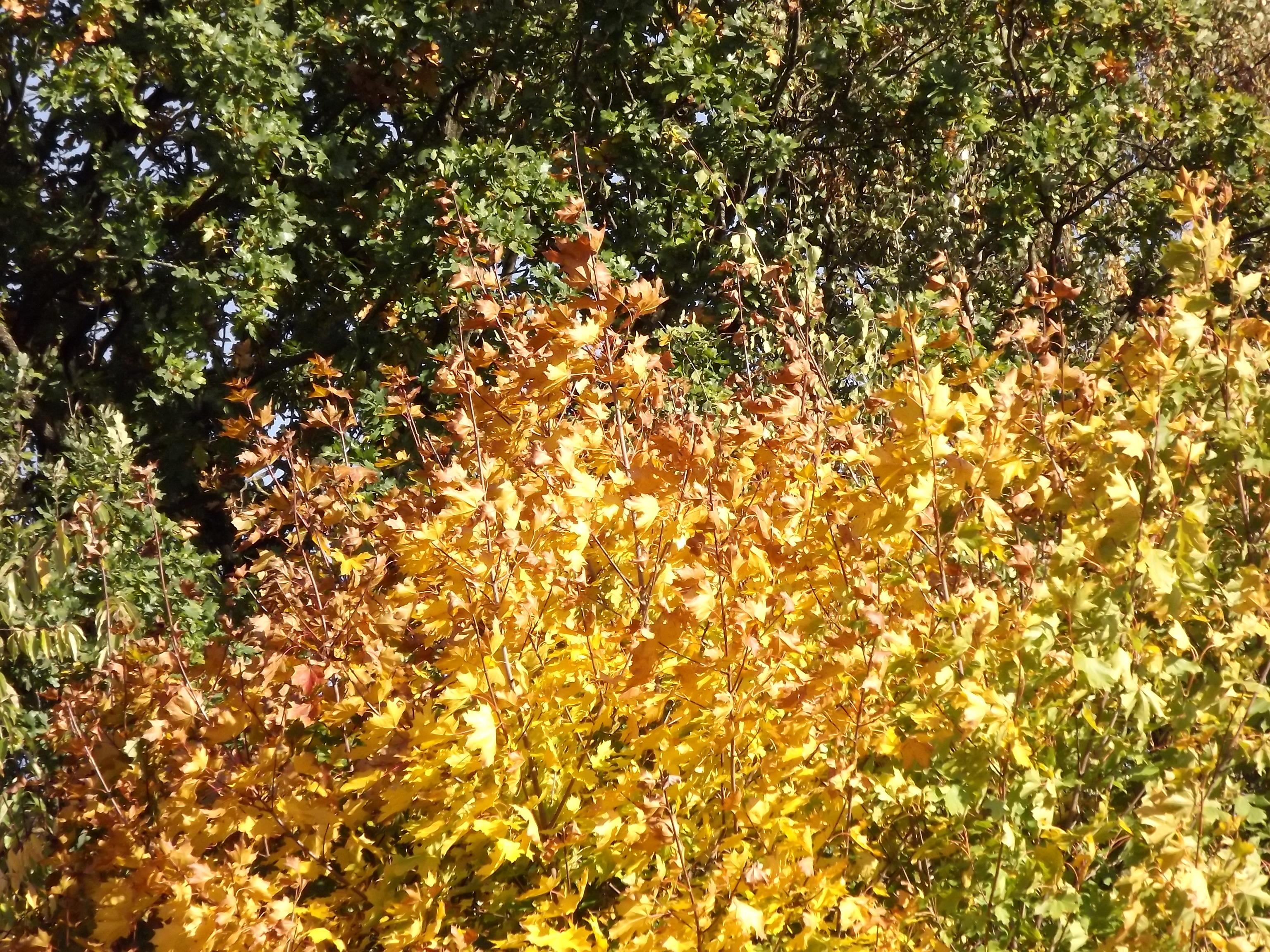 7984-laub-an-baeumen-straeuchern-rot-gelb-gruen