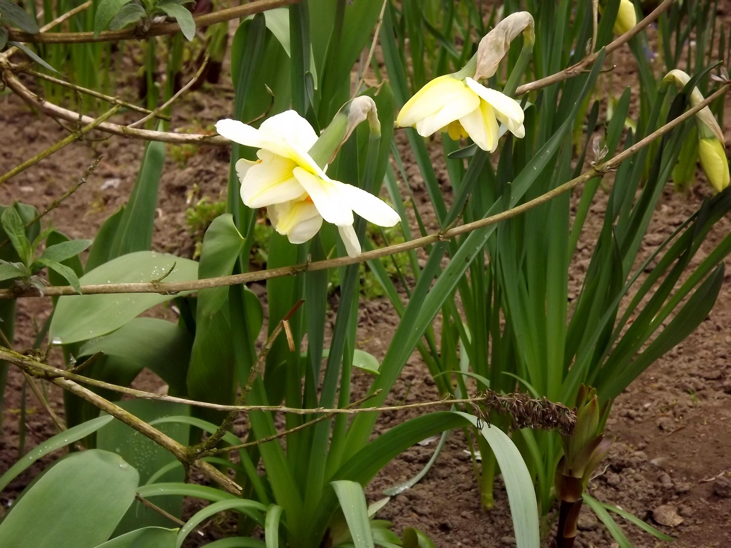 5890weisse-gelbe-blueten