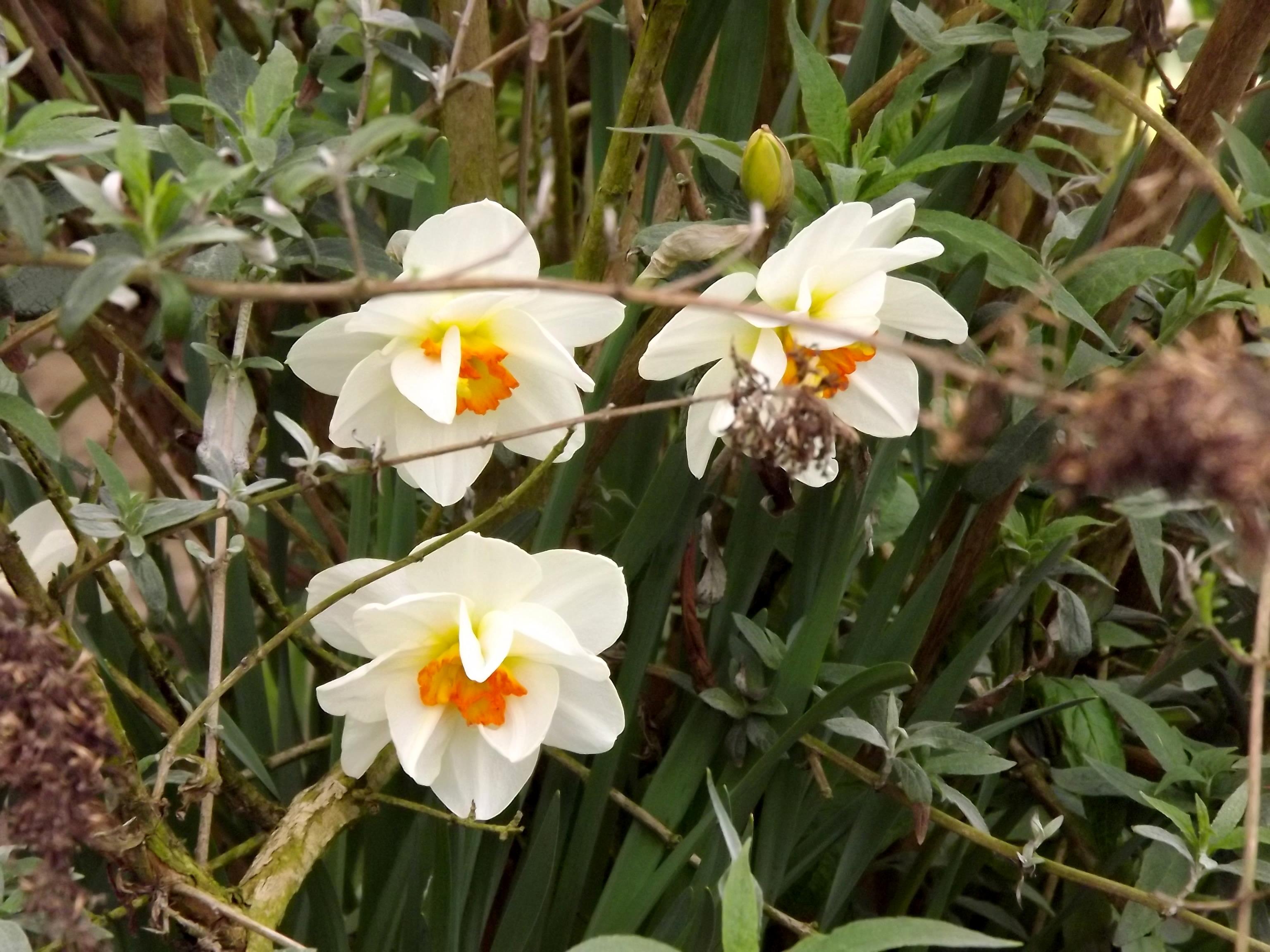 5891weisse-gelbe-blueten