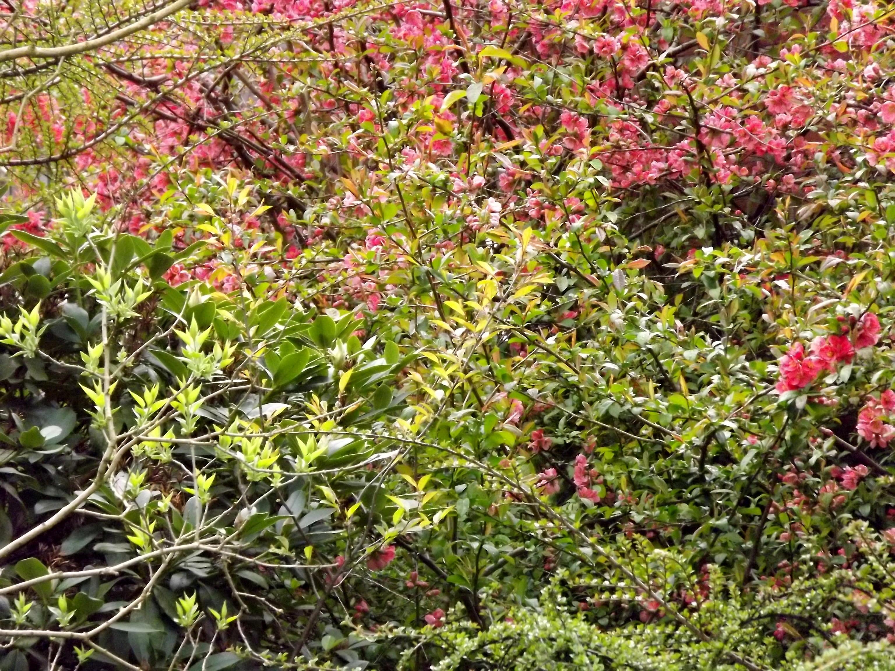 5896-rosa-bluehten-frisches-gruen-verlauf