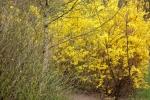 5889-gelb-bluehendes-gebuesch