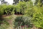 gebusch-palmlilie