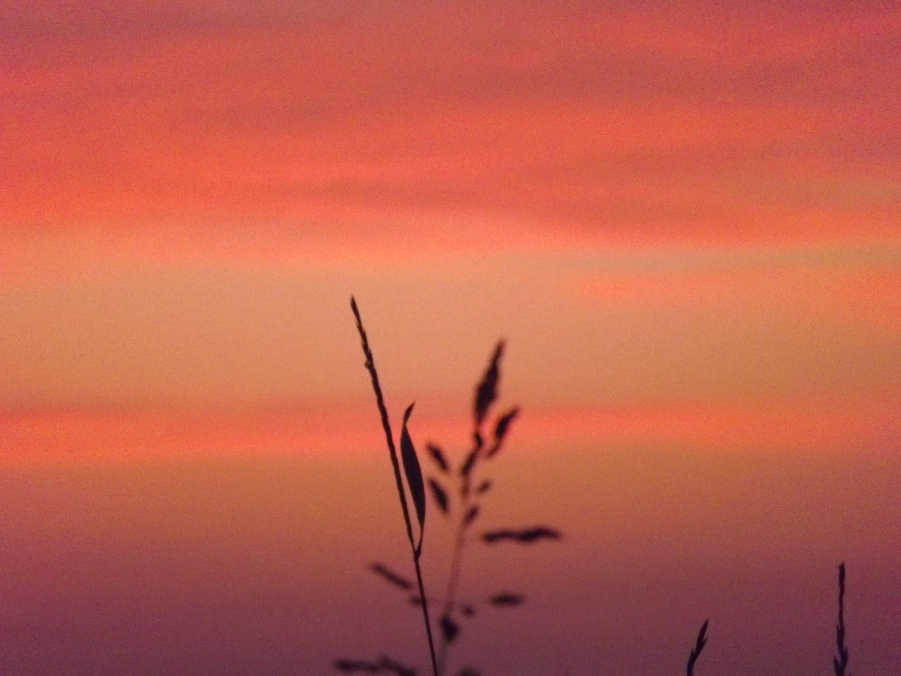 8696-grashalm-vor-rot-braunem-himmel