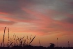 8686-gras-daemmerung-rot-brauner-himmel
