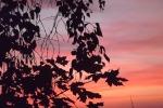 8687-ast-vor-rot-rosa-himmel