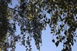 8845-bikenast-vor-blauem-himmel