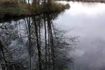 spiegelung-baume-see