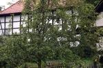 birnnenbaum