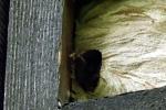 nest-im-muehlhaus