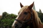 pferd-profil