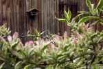 5201-rosa-blueten-vogelhaus