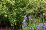 5204-iris