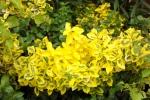 5207-gelbe-blueten-und-blaetter