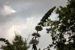 5349-blueten-himmel-wolken