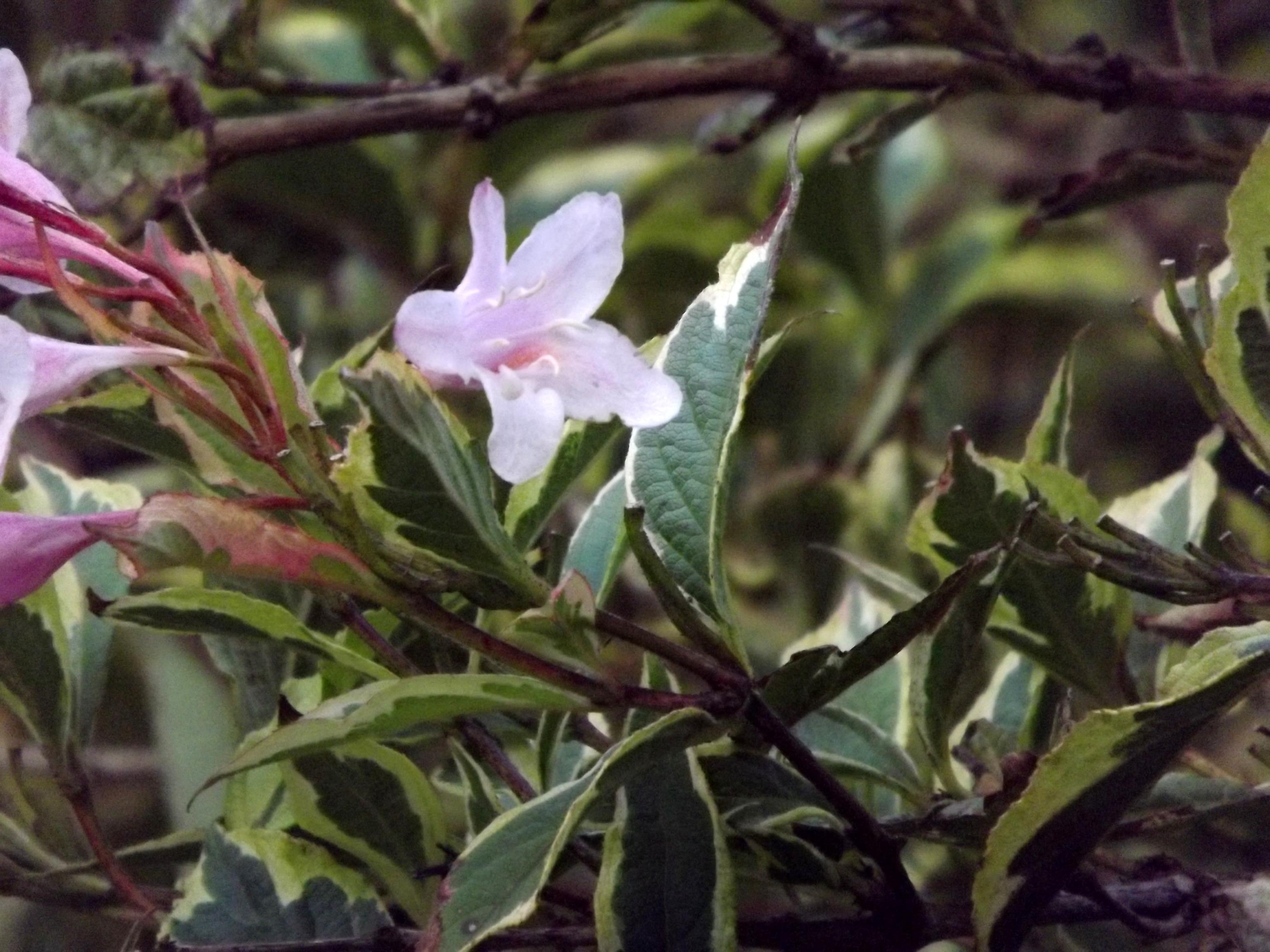 6529-dunkles-gruen-rosa-blueten-herbst