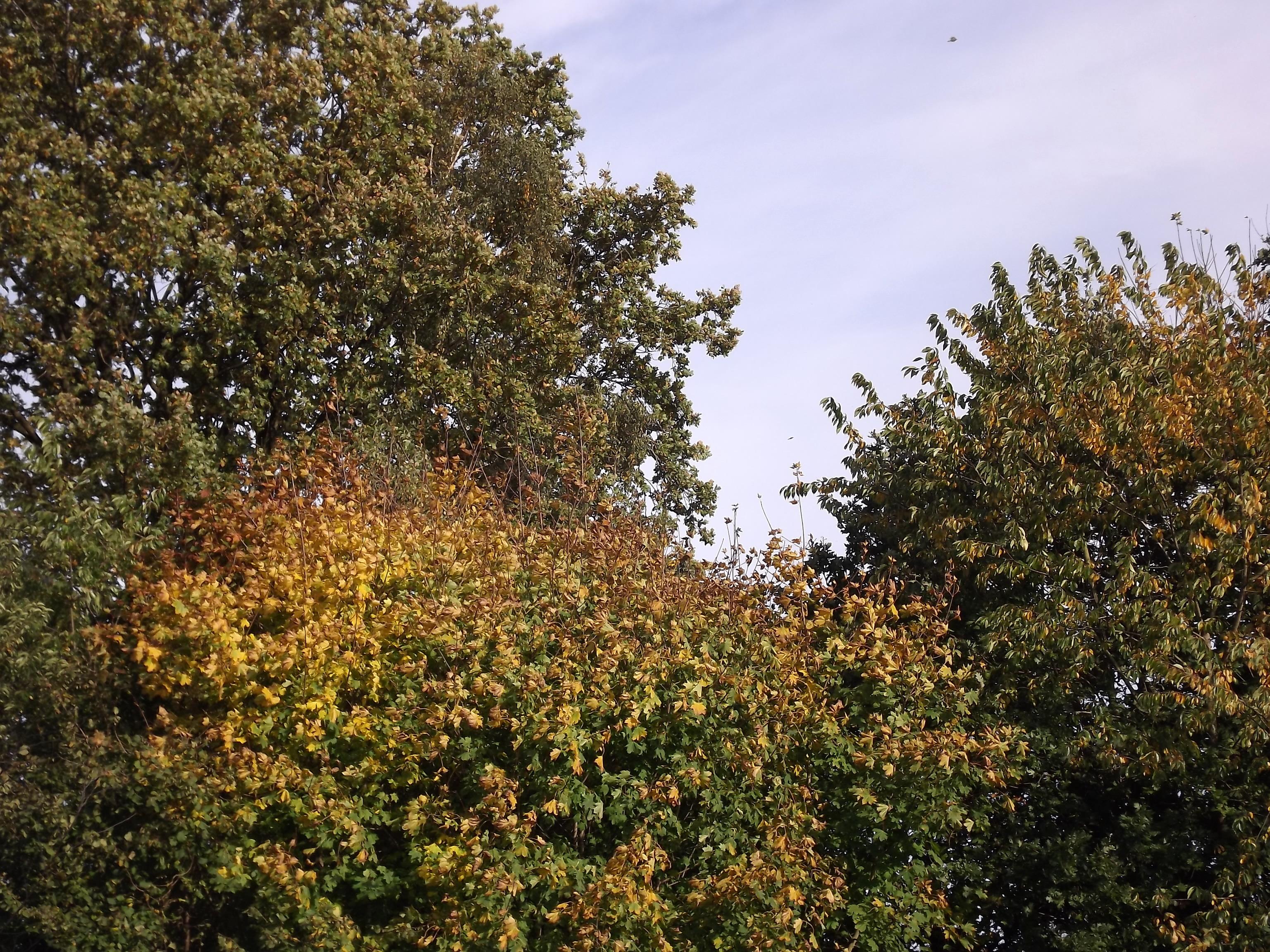 6537-blaetter-gruen-gelb-rot