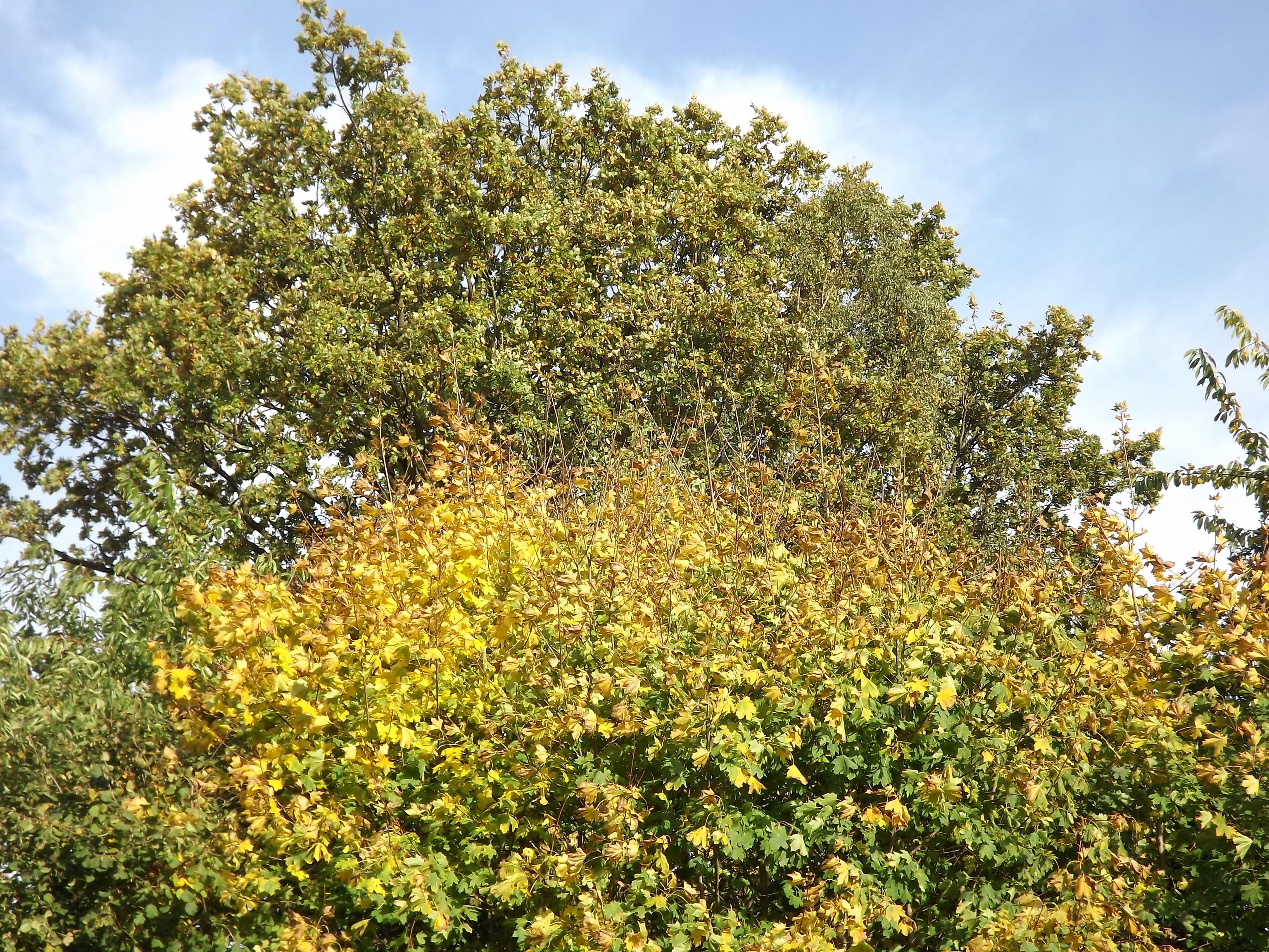 6541-gruen-gelb-rot-blaetter