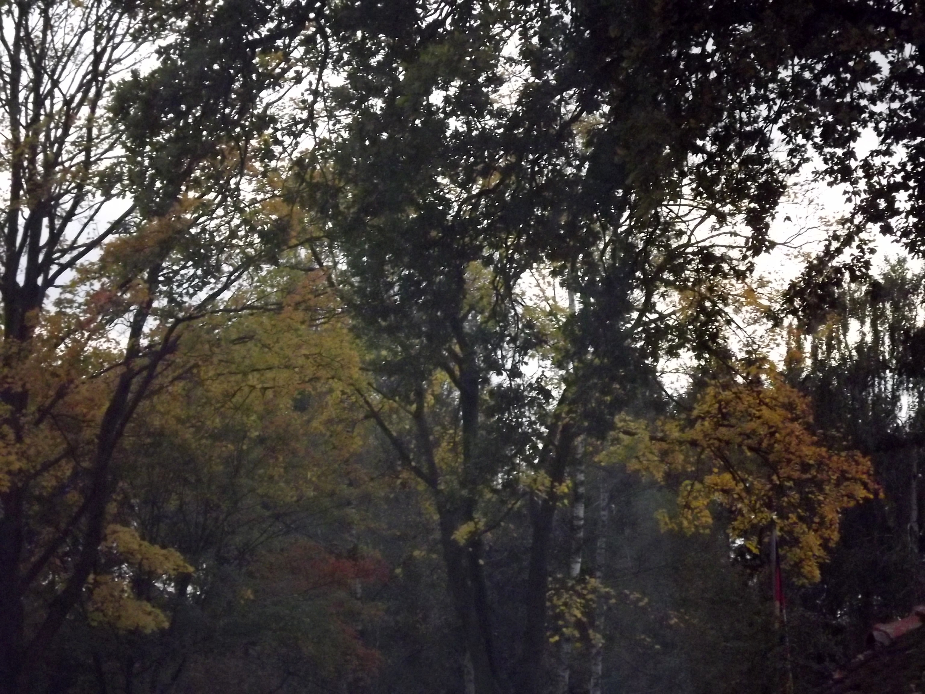 6550-herbstwald-nebel