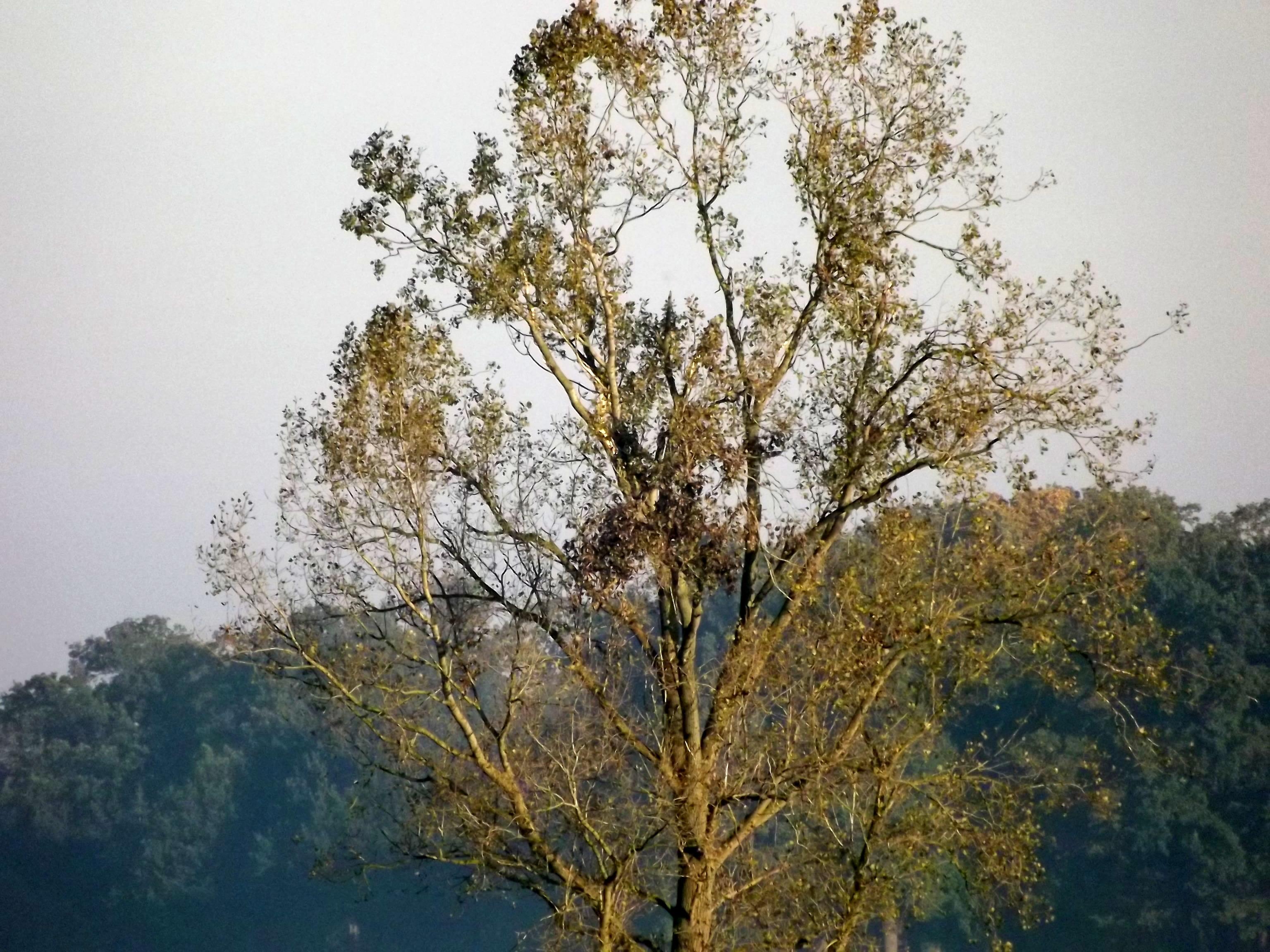 6558-herbst-feld-kahler-baum