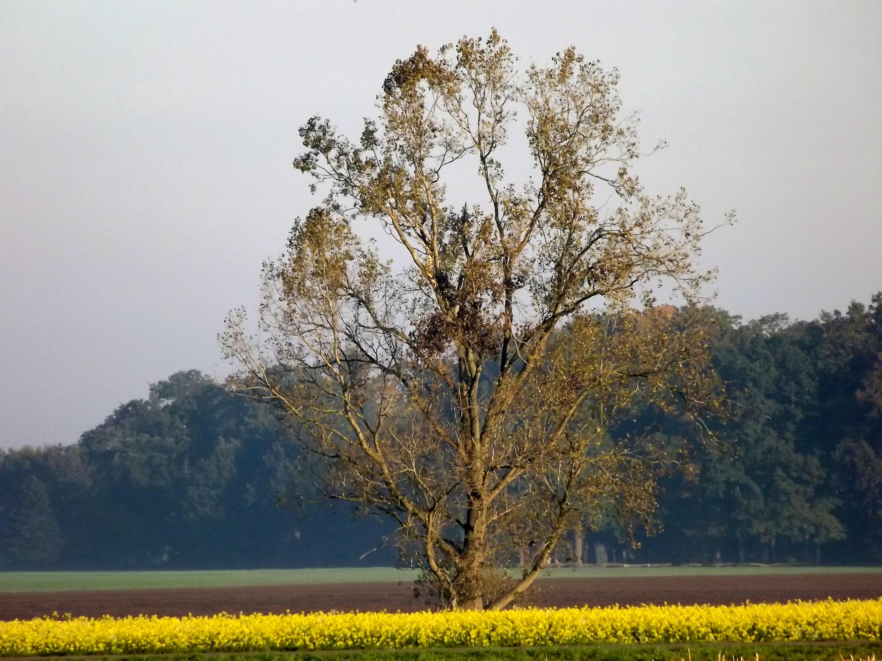 6559-herbst-feld-kahler-baum