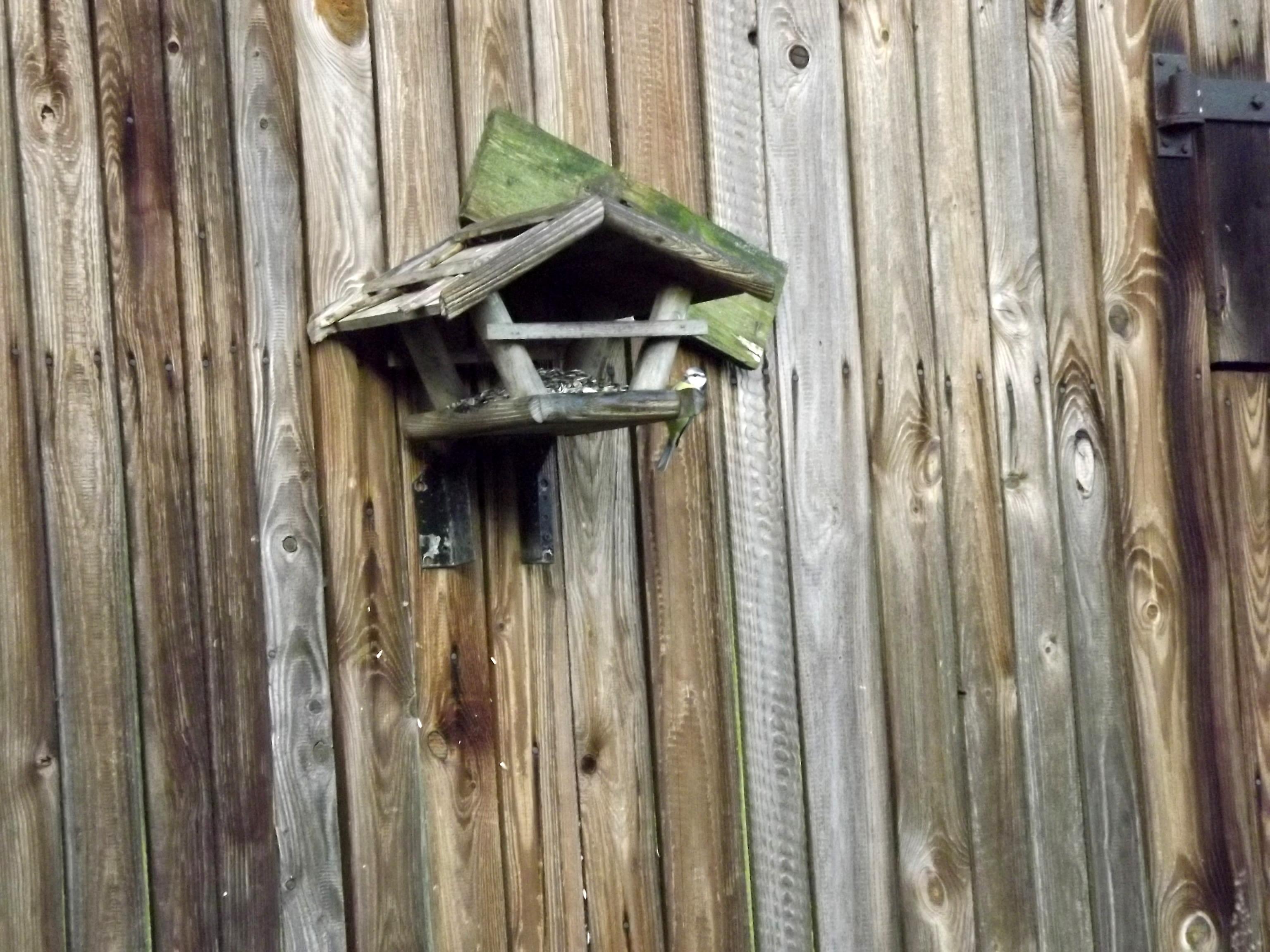 6600-vogelhaus-mit-vogel