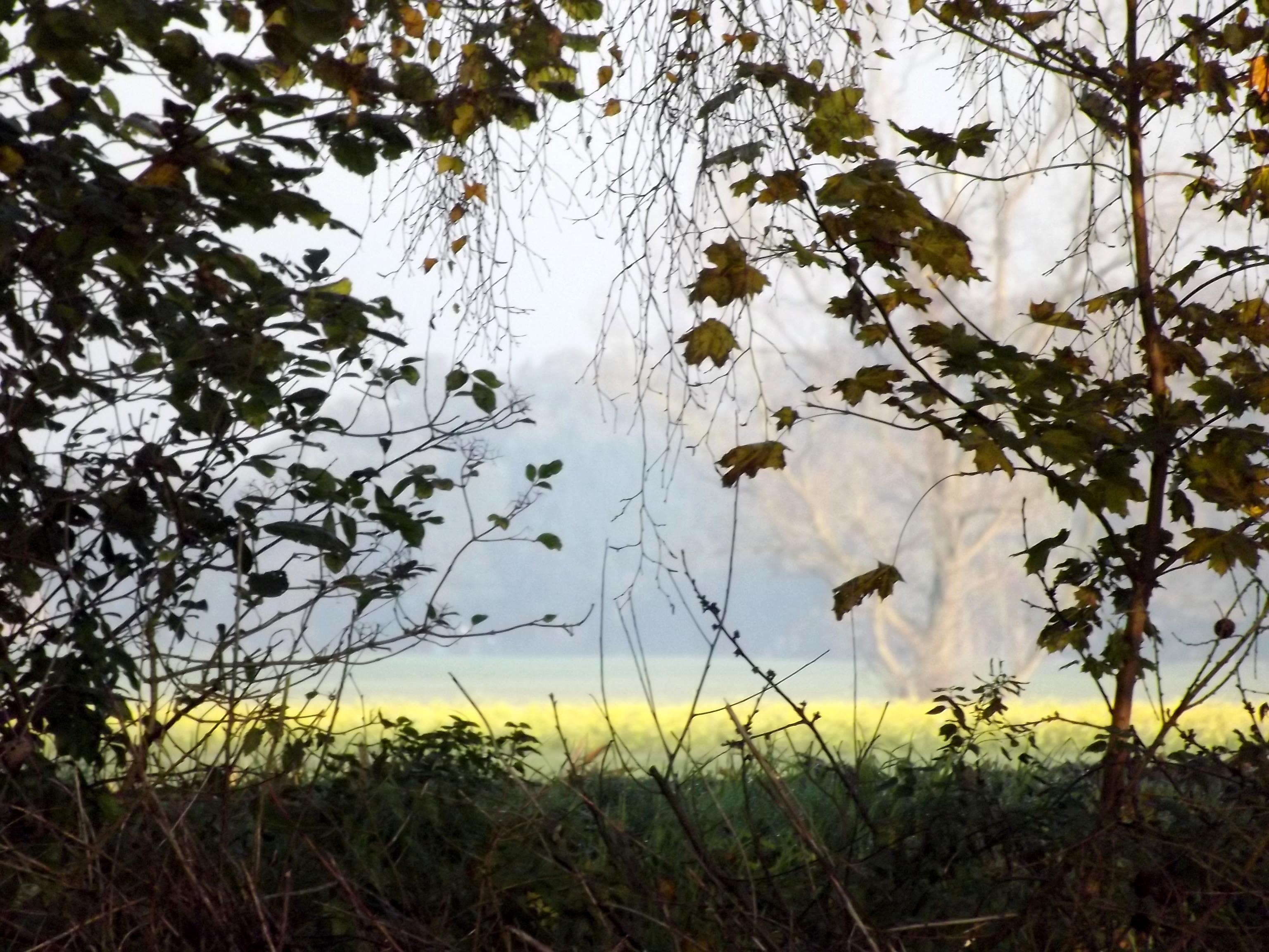 6601-ausblick-aus-dem-wald