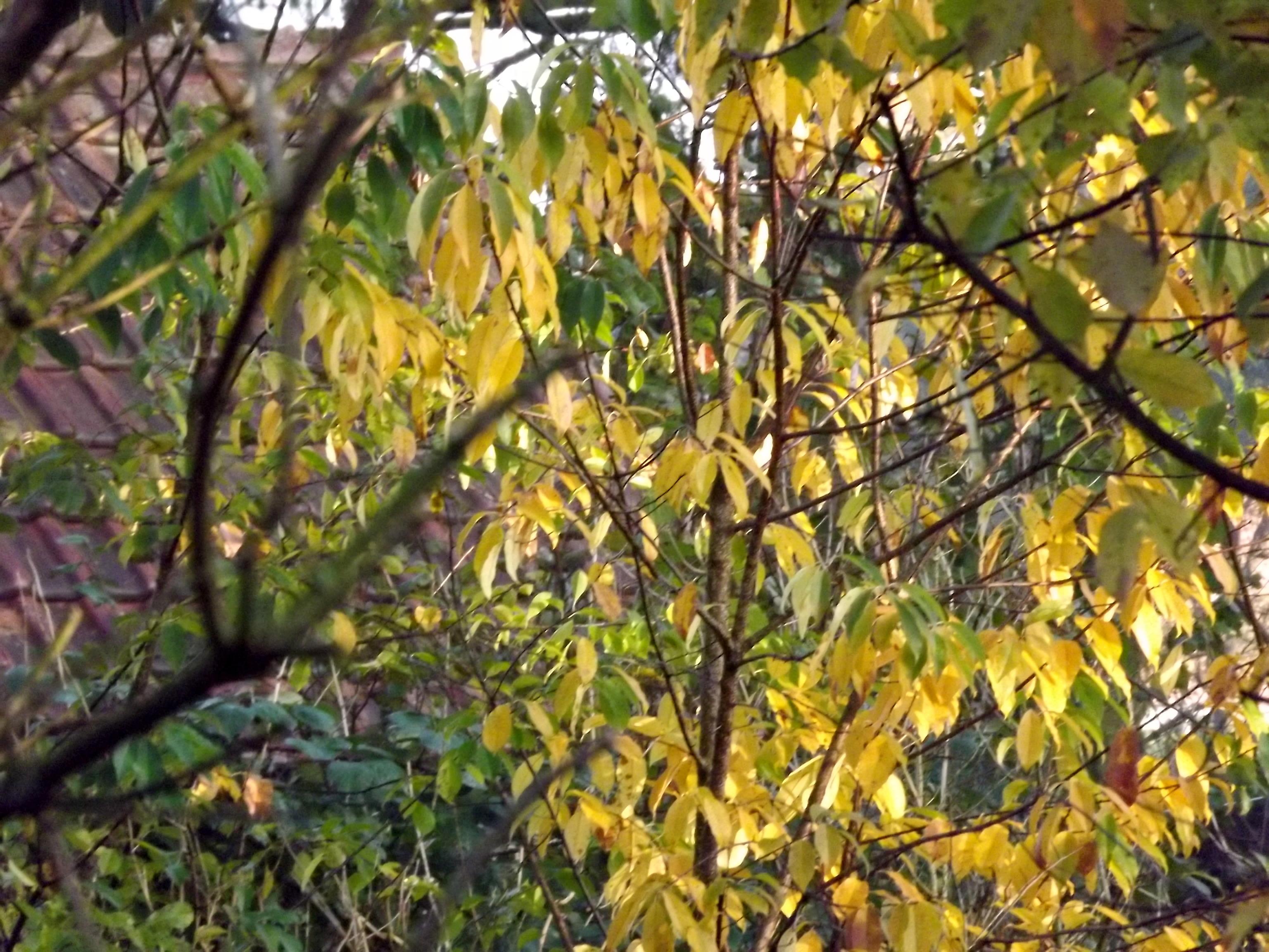 6602-zweige-gruen-gelb