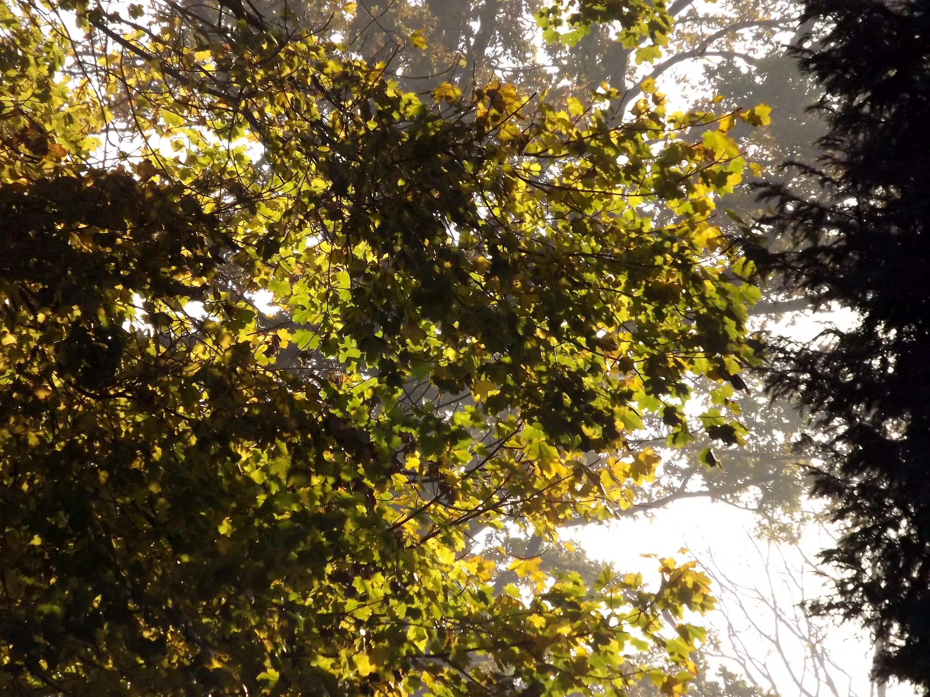 6606-herbst-blaetter-sonnenlicht