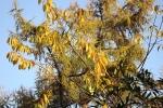 6599-blaetter-gold-gelb