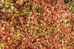 6619-gebuesch-rot-gruen