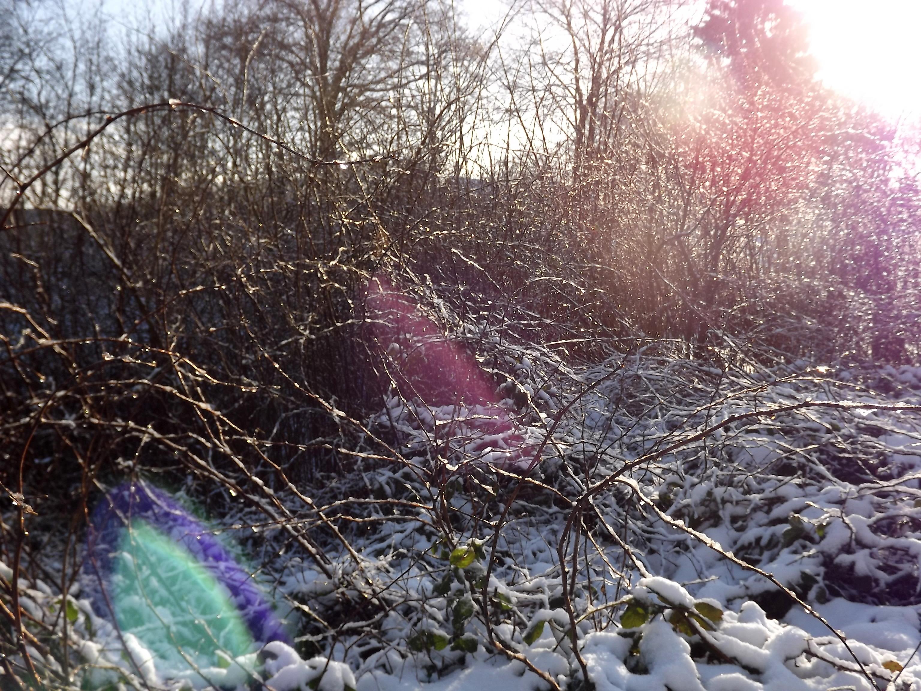 5766-schnee-natur-lensflare