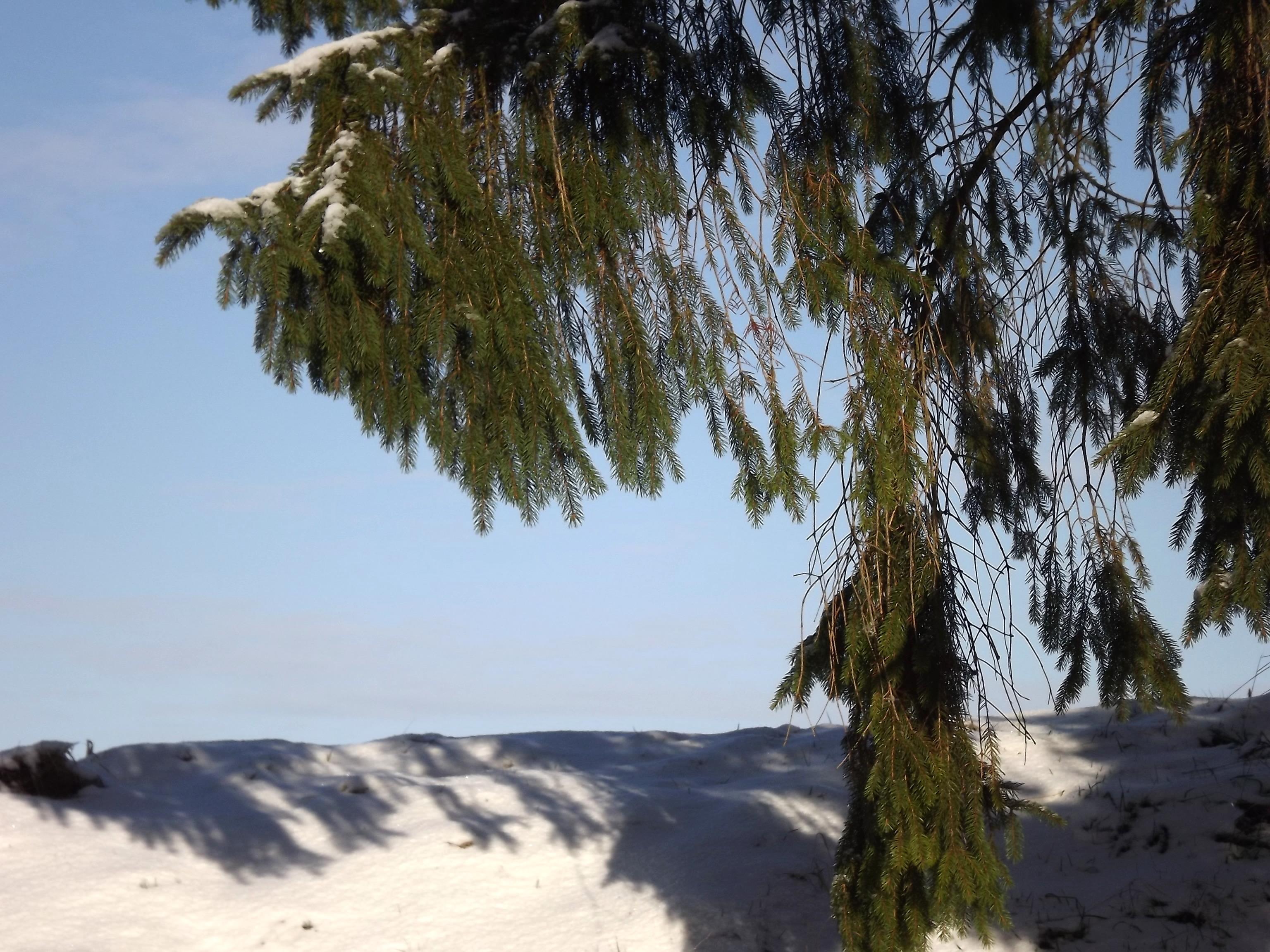 5768-schnee-hang-tanne-hintergrund-rahmen