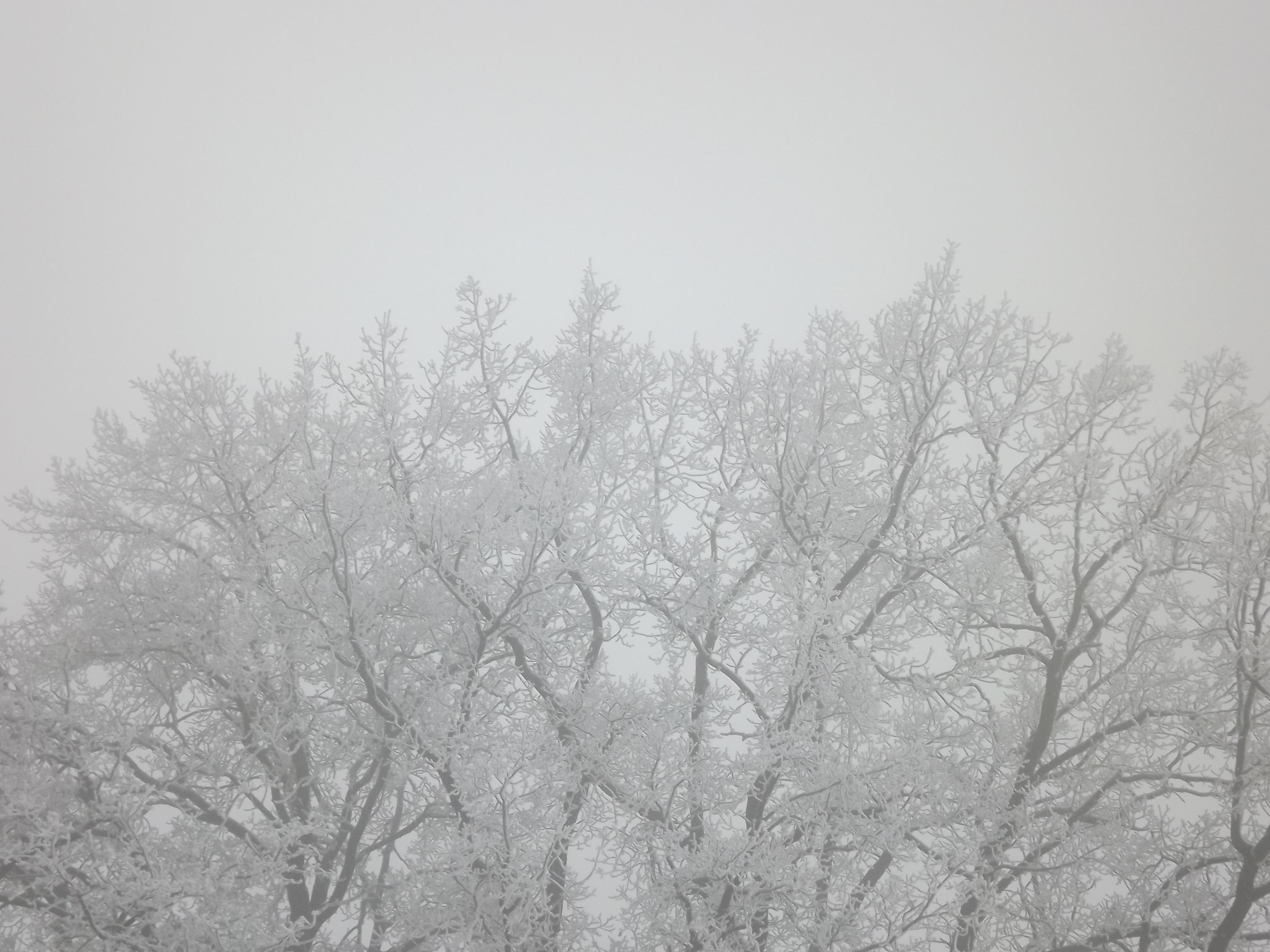 5802-vereiste-baeume-nebel